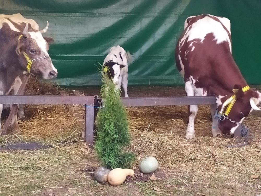 """Evenimentul anului """"FARMER 2019"""""""